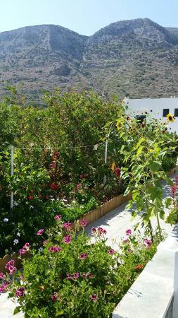 Hotel Afroditi. Sifnos, fin juillet 2015. La terrasse du petit déjeuner, le jardin menant aux ch