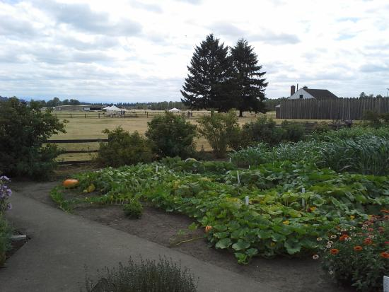 Fort Vancouver National Historic Site: Garden 4