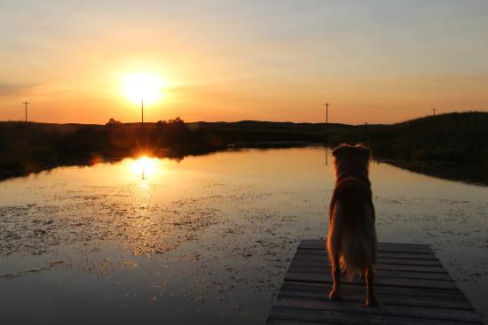 Wood Lake, Небраска: Mylo enjoying the view