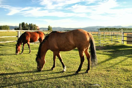 Morley's Acres Farm and Bed & Breakfast : Horses of Morley's Acres