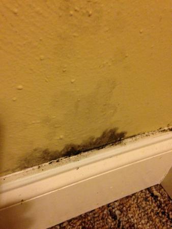 Nice Rodeway Inn Virginia Beach: Black Mold On Bedroom Wall