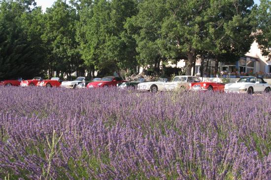 Les Lavandins : le parking face au champ de lavandes