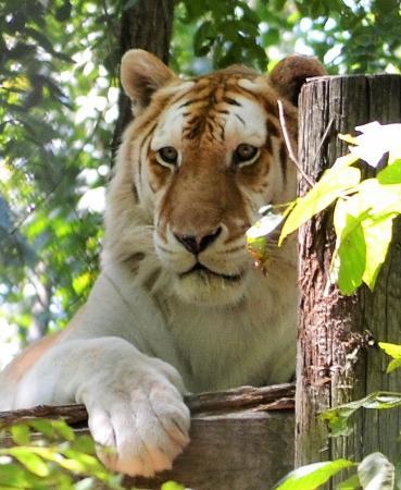 Exotic Feline Rescue Center: Beautiful cats