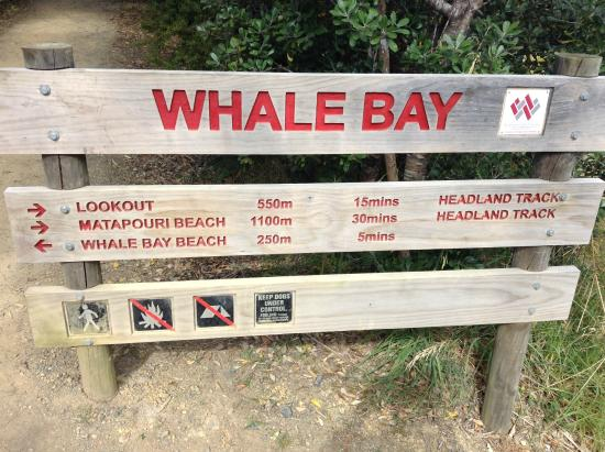 Whangarei, New Zealand: Whale Bay