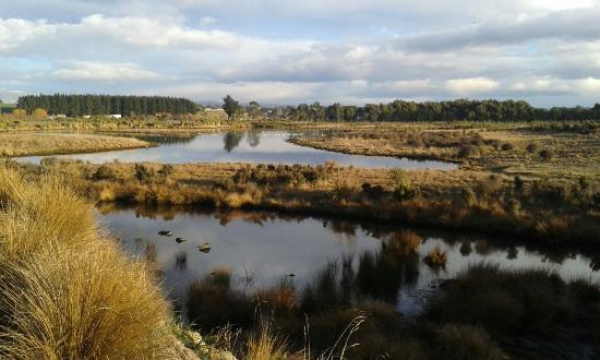 Otipua Wetland