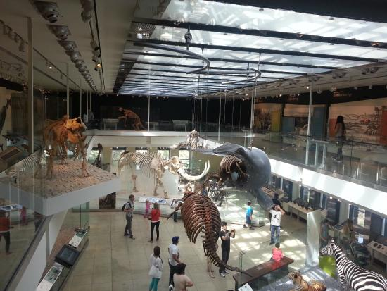 Natural History Museum Of Los Angeles County Ticket Prices