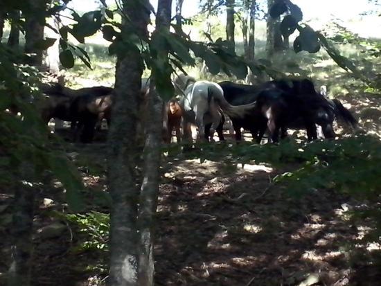 Farmhouse La Chiusa: Incontri al Prato Magno