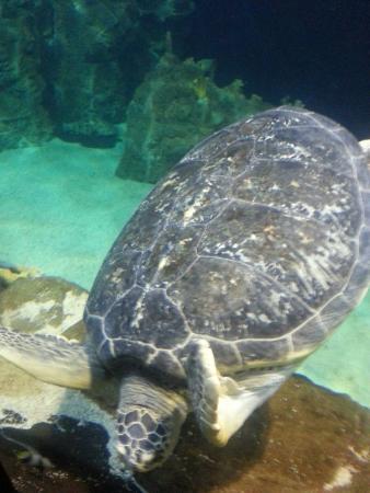 Tartaruga marina foto di acquario di livorno livorno for Tartaruga da acquario