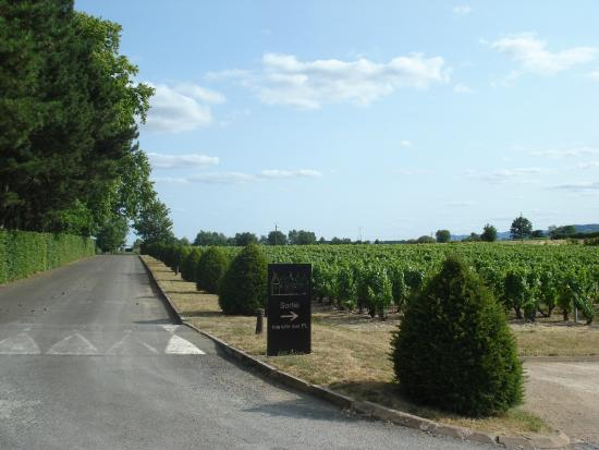 Le Relais des Dix Crus Hotel : From the near by grape wine yard