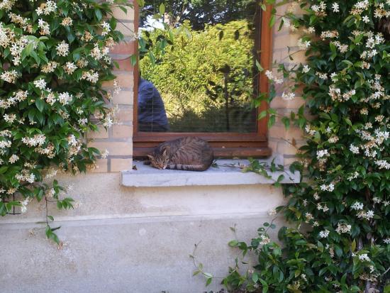 Relais Des Cailleres: The friendly cat