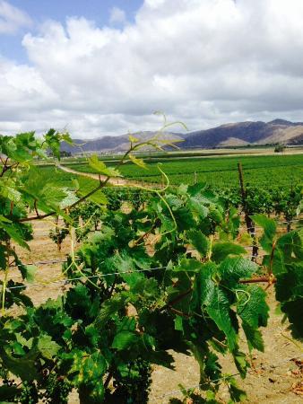Valley Girl Baja Wine: Vines of the valley