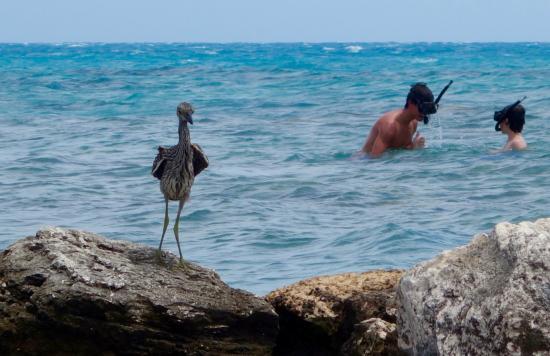 Hamilton, Bermudas: after SCUBA snorkling