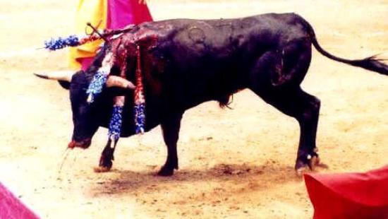 Bullfighting Museum: photo0.jpg
