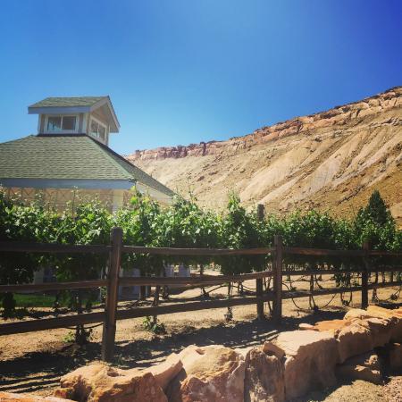 Palisade, CO: Our pavilion against a blue Colorado sky.