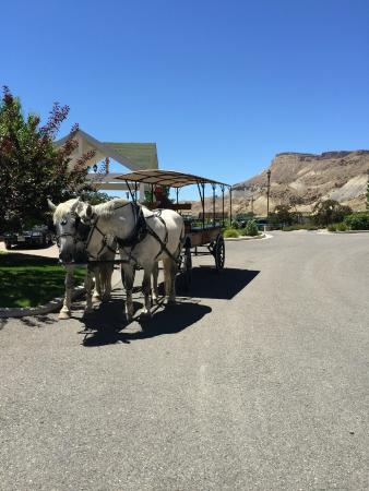 Wine Country Inn: Ask us how to make reservations for vineyard tours in a horse drawn carriage.