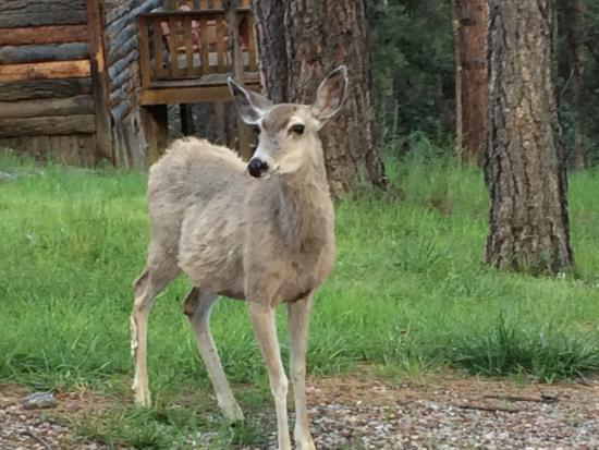 Idle Hour Lodge : Ruidoso Wildlife