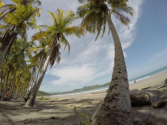 Hotel Sol Samara: Playa Carillo, (No se puede dejar de visitar)