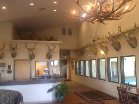 Selah, WA: Owners personal kill collection litters the lobby.