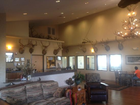 Selah, WA: Owner's personal collection of creatures he's killed.