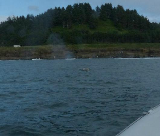Depoe Bay, Орегон: The blow of a grey. . . note how close to shore we are.