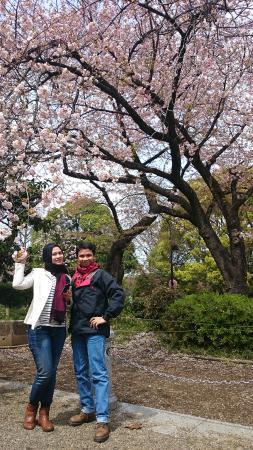 Ueno Park : Cherry Blossom menjadi latar belakang yang oke