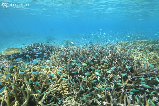 はいむるぶし, 熱帯魚の群れが出迎えてくれるサンゴ礁の海