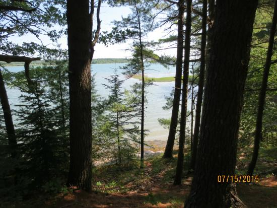 Mackworth Island: woodland trail