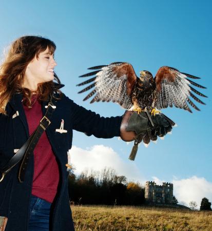 West of England Falconry照片