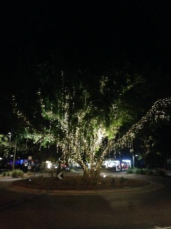 Beautiful tree on Hastings Street, Noosa, QLD.