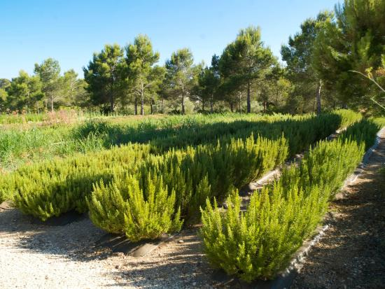 Botanical Garden Ecoherbes Park