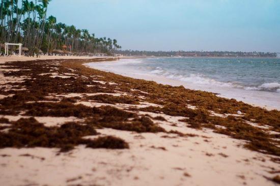 Plage à 5h du matin Picture of Grand Palladium Punta Cana