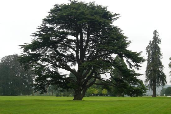 Pavillon d 39 entr e picture of parc culturel de rentilly bussy st georges tripadvisor - Cedre bleu du liban ...