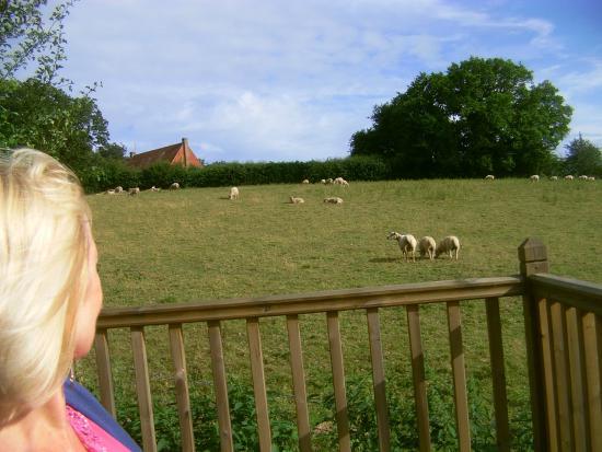 Cleavers Lyng: Talking to sheep