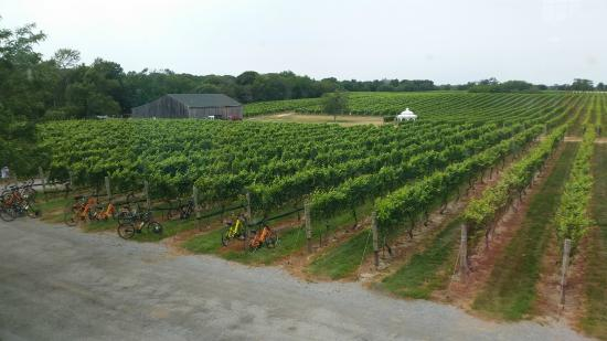 North Fork Bicycle Tours: Winery view