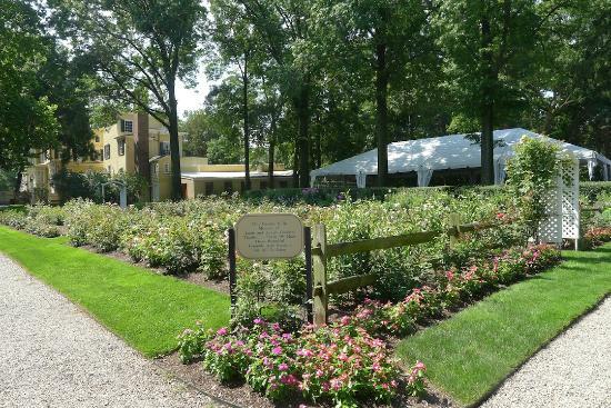 Liberty Hall Museum: rose garden