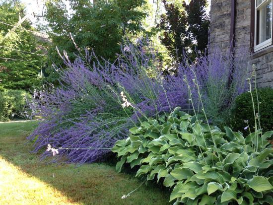 Springbank House: A small piece of the garden