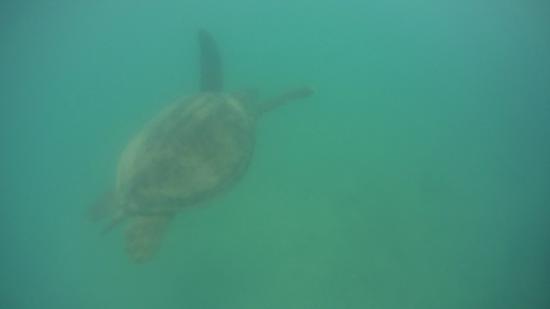 Playa de Oludeniz: Swimming with Turtles at the Lagoon (Billy's Beach)