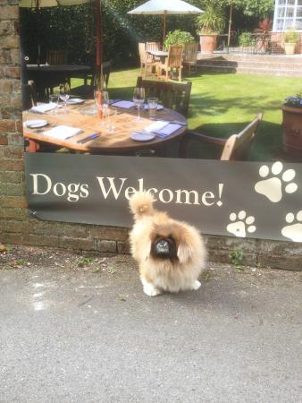 B+B Wickham: Dogs made very welcome