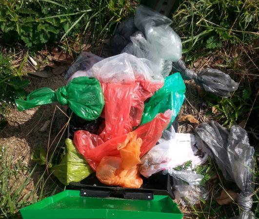 Comfort Inn & Suites Savannah Airport: Overflowing dog waste.