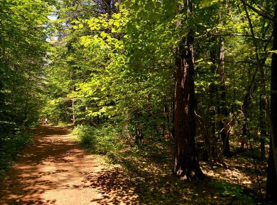 Auburn, NH: Massabesic Audubon Center
