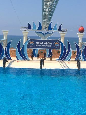 Sealanya Dolphinpark Seapark - Picture of Sealanya ...