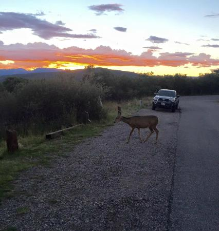 Black Canyon of the Gunnison National Park, South Rim Campground: Deer in campground