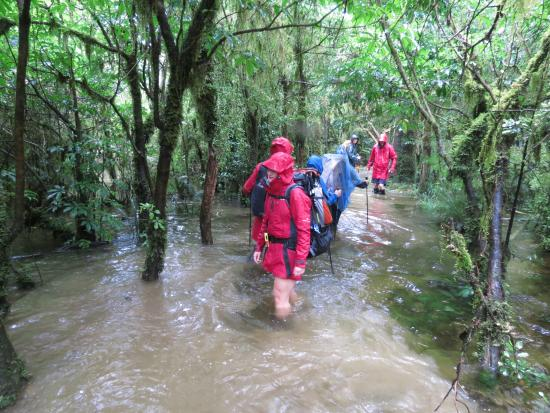 Milford Track: walking in a knee-deep water hole filled with eels
