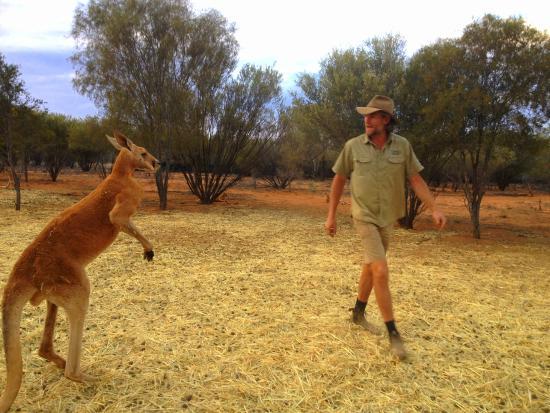 The Kangaroo Sanctuary: Brolga and Roger battle it out