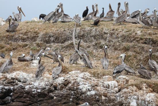Pescadero State Beach : Bird Island