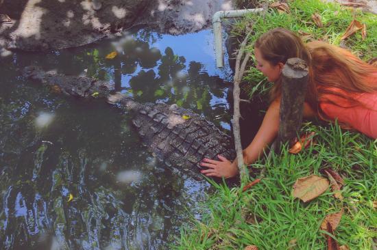 Santuario de Cocodrilos El Cora : Petting a croc
