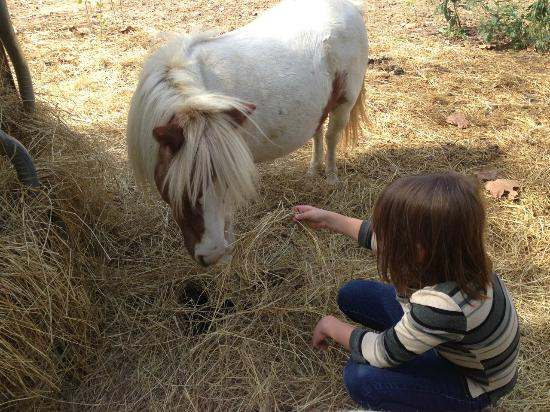 Natural Valley Ranch: Visiting with the miniature horses