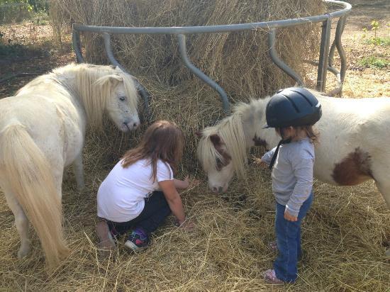 Natural Valley Ranch: Visiting the minis
