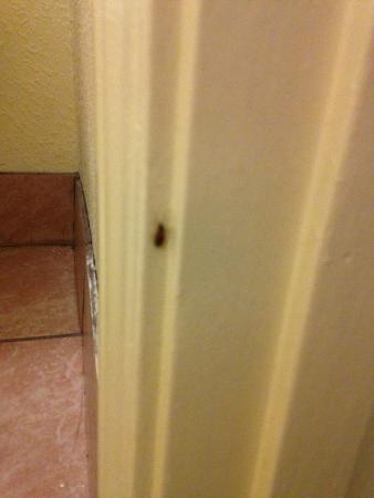 Days Inn Rock Hill: bigger roach