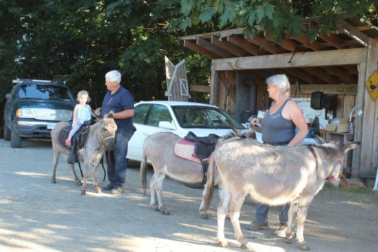 Arrowvale: Our donkeys
